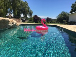 Pink Pong Pool Party!!